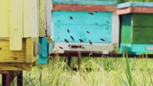 Thumbnail for Bees Sits at Beehive