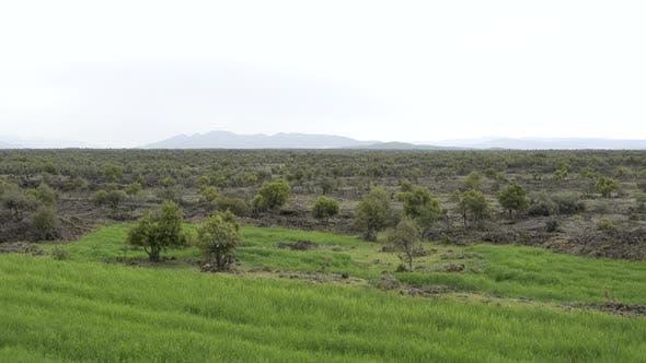 Thumbnail for Basalt Plateau