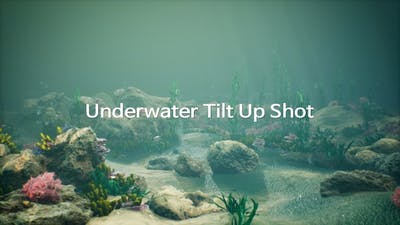 Underwater Tilt Up Shot