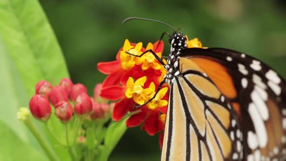 Thumbnail for Butterfly And Flowers Macro
