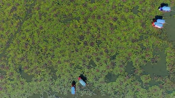 Thumbnail for Red Lotos Lake