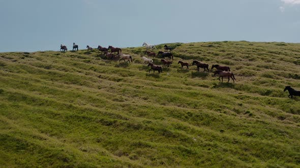 Thumbnail for Aerial Drone View. Wild Horses on the Green Mountains In Background Rock and Blue Sky