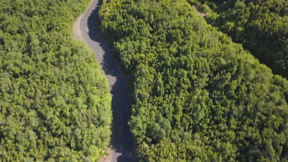 Thumbnail for Aerial Top View of Beautiful Road Through the Green Forest