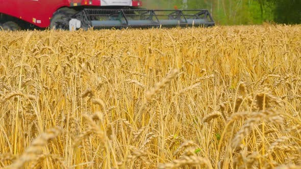 Thumbnail for Close Up Combine Harvesting Wheat