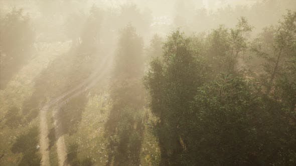 Cover Image for Dirt Road Through Deciduous Forest in Fog