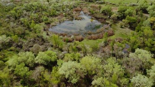 Lake Aerial View
