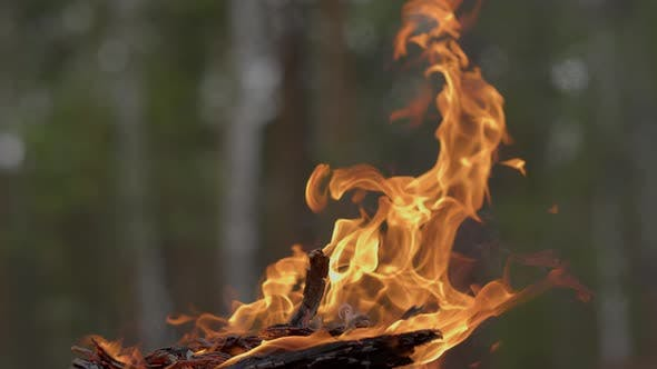 Thumbnail for Close Up on Charred Logs Burning at Daytime in Summertime Forest.