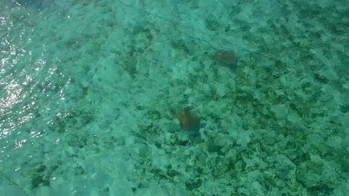 Aerial drone view of stringrays in shallow water in the Maldives.