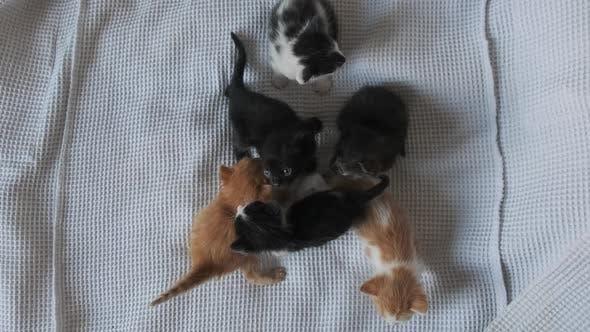 Six Newborn Little Kittens Crawling on White Background. Group of Cute Kittens