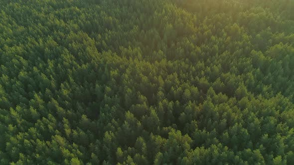 Thumbnail for Forest at Sunrise Aerial View