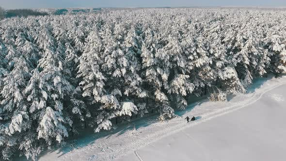 Thumbnail for Aerial View on Winter Pine Forest and Snowy Path with People on a Sunny Day