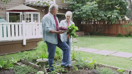 Thumbnail for Mature couple gardening in yard