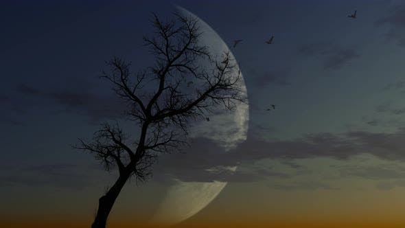 Thumbnail for Epic Tree With Moon In Background