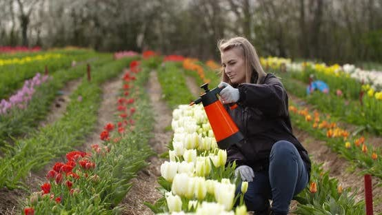 Thumbnail for Female Farmer Spraying Tulips at Farm
