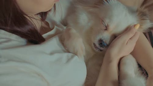 Close Up of White Spitz Lying on Woman