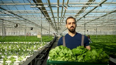 Farmer in a Greenhouse Walking with a Box
