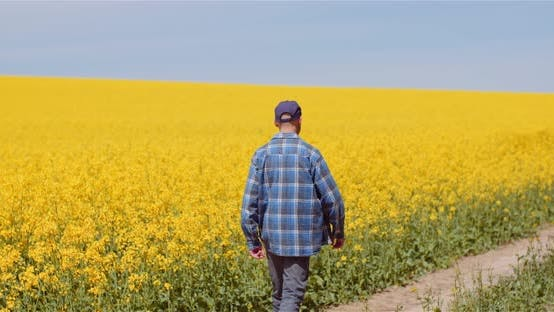 Thumbnail for Agriculture Farmer Examining Rapeseed Field