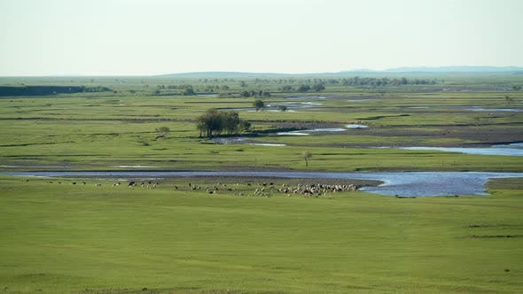 Thumbnail for Meandering River in a Vast Lowland