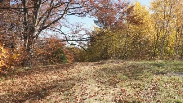 Thumbnail for Feldboden mit Blättern