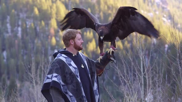 Thumbnail for Golden eagle perched on falconers glove