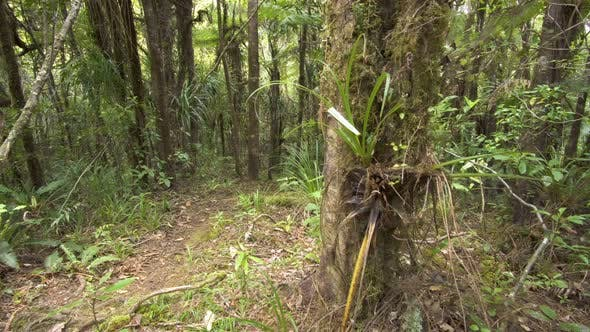 Thumbnail for Green Primeval Forest