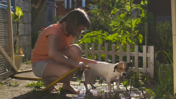 Thumbnail for Children In The Yard Outside Are Washing Dog