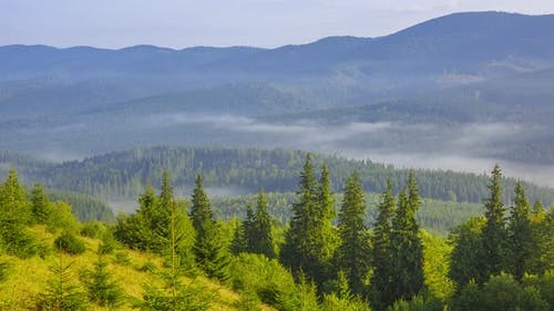 Morning Fog in a Wooded Valley