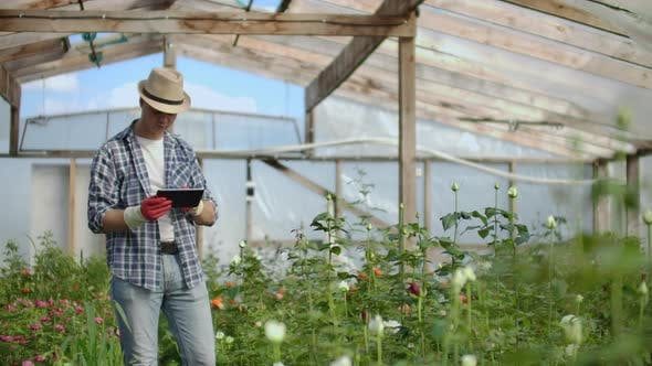 Thumbnail for Man Gardener in a Hat Looking for Flowers. A Modern Florist Uses a Tablet Computer To Analyze the