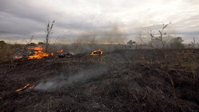 Fire on a field in the steppe