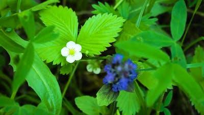 Flower and Strawberry Leaf
