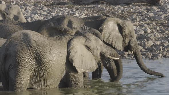 Thumbnail for Elephants Inside a Waterhole