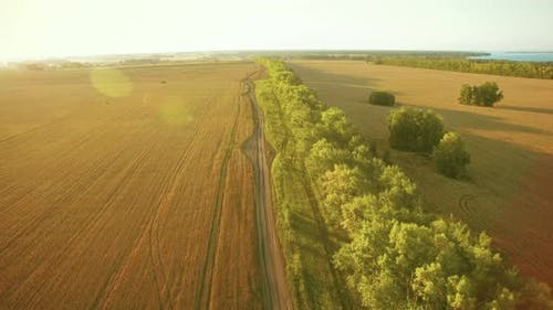 Low Flight Over Green and Yellow Wheat Rural Field and Tree Line