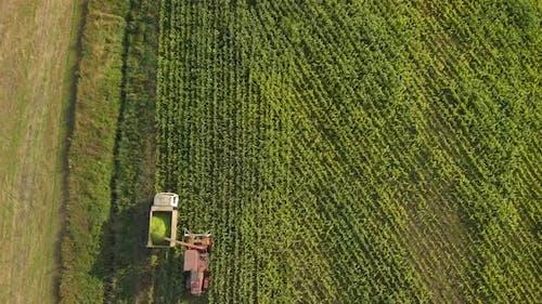 Forage Harvester Removes Corn