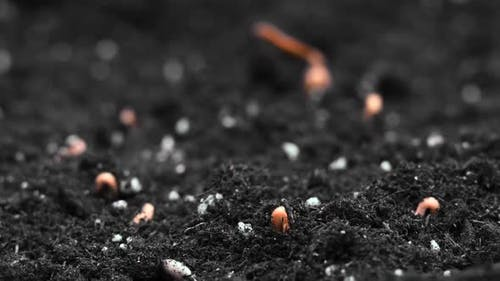 Growing Plants in Spring Timelapse, Sprouts Germination Newborn Plant in Greenhouse Agriculture