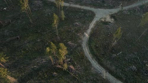 Deforestation Drone Video Over Clear Cut Forest Trees On Logging Road