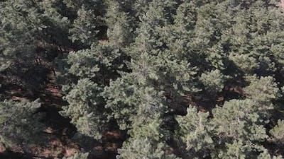 Aerial Environment Natural