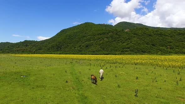 Thumbnail for White and brown horses eating fresh green grass in valley, farming aerial view