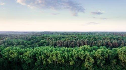 Magischer Wald mit Bäumen