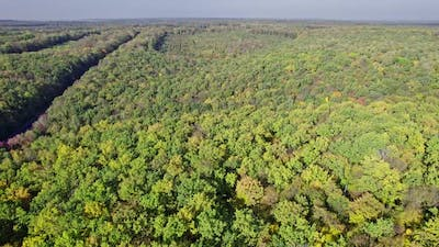 Aerial Shot of Forest in Fall Season