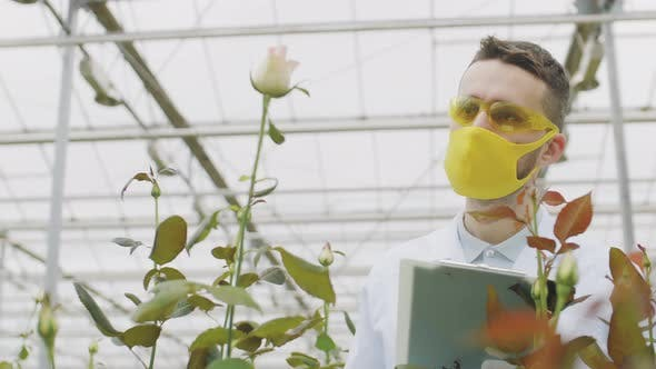 Thumbnail for Agricultural Engineer Spraying Flowers Using Sprayer