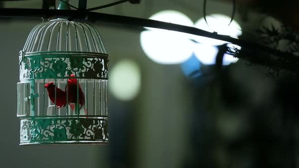 Thumbnail for Small Songbird in Beautiful Locked Cage, Street Decoration, Interior Detail