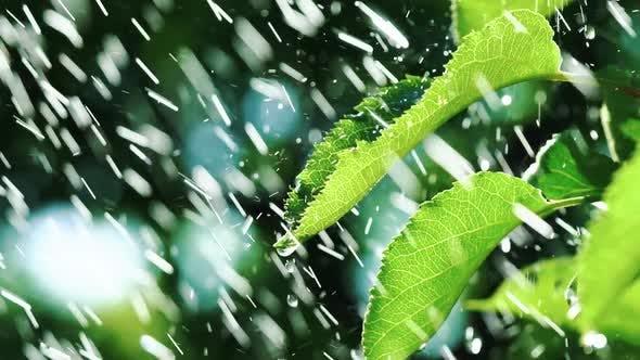 Thumbnail for Heavy Rain Falling on Leaves