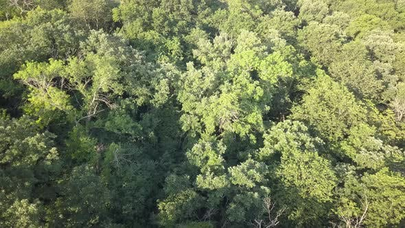 Thumbnail for Aerial Drone Looking Down on Forest Woodland Minnesota Summer Canopy Treetops