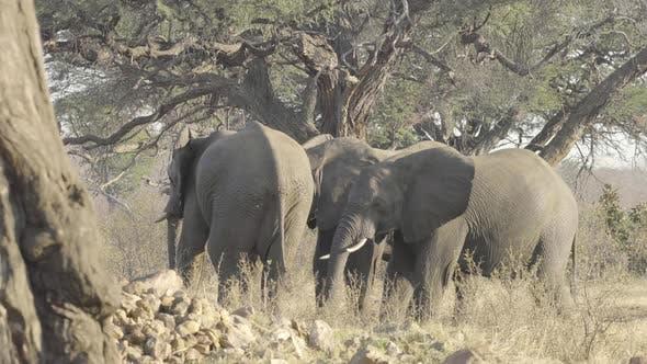 Elephant Herd At a Waterhole