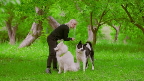 Girl Trainer Trains Dogs