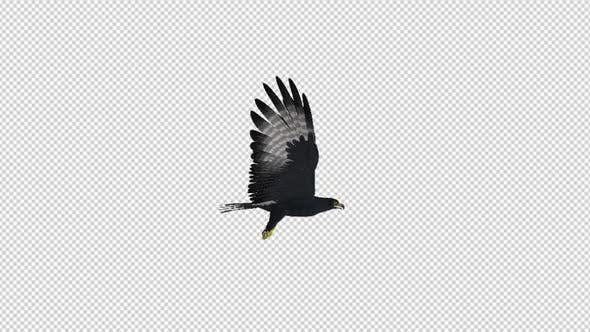 Thumbnail for African Eagle - 4K Flying Loop - Right Side View
