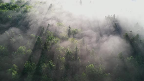 Foggy morning in the forest and landscape