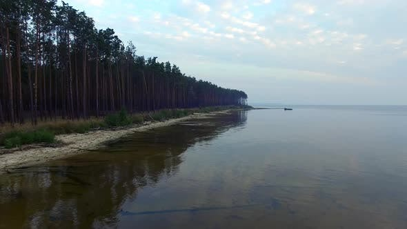 Cover Image for Aerial Landscape Pine Forest on Lake Coast with Transparent Water