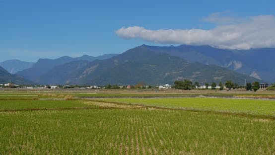 Thumbnail for Chishang paddy rice meadow field