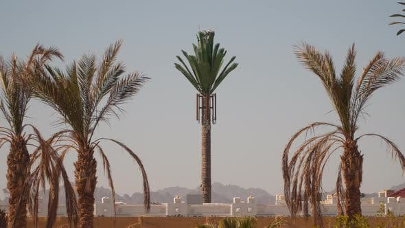 Thumbnail for Tower Mobile Antennae As Palm